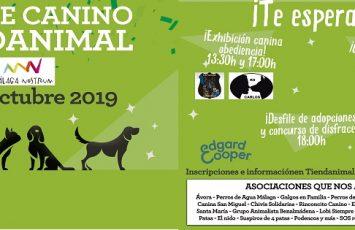 desfile canino tiendanimal